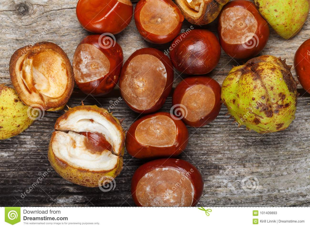 Download Chestnut on the table stock image. Image of heap, decoration - 101409893