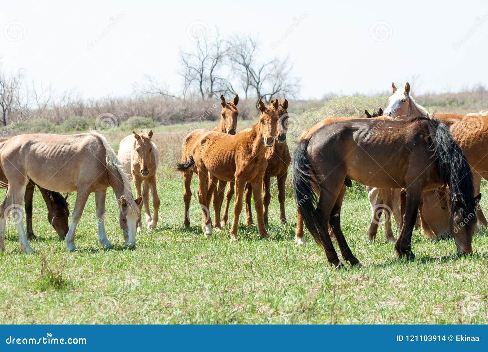 Cheval, équin, canasson, hoss, entaille, cheval de trait
