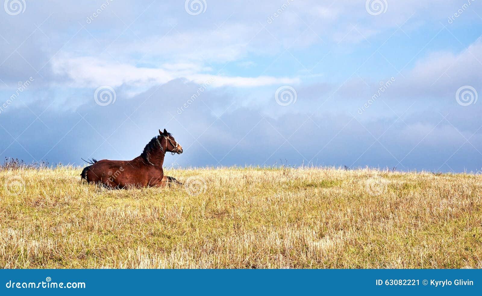 Download Cheval image stock. Image du pouliche, rustique, cheval - 63082221