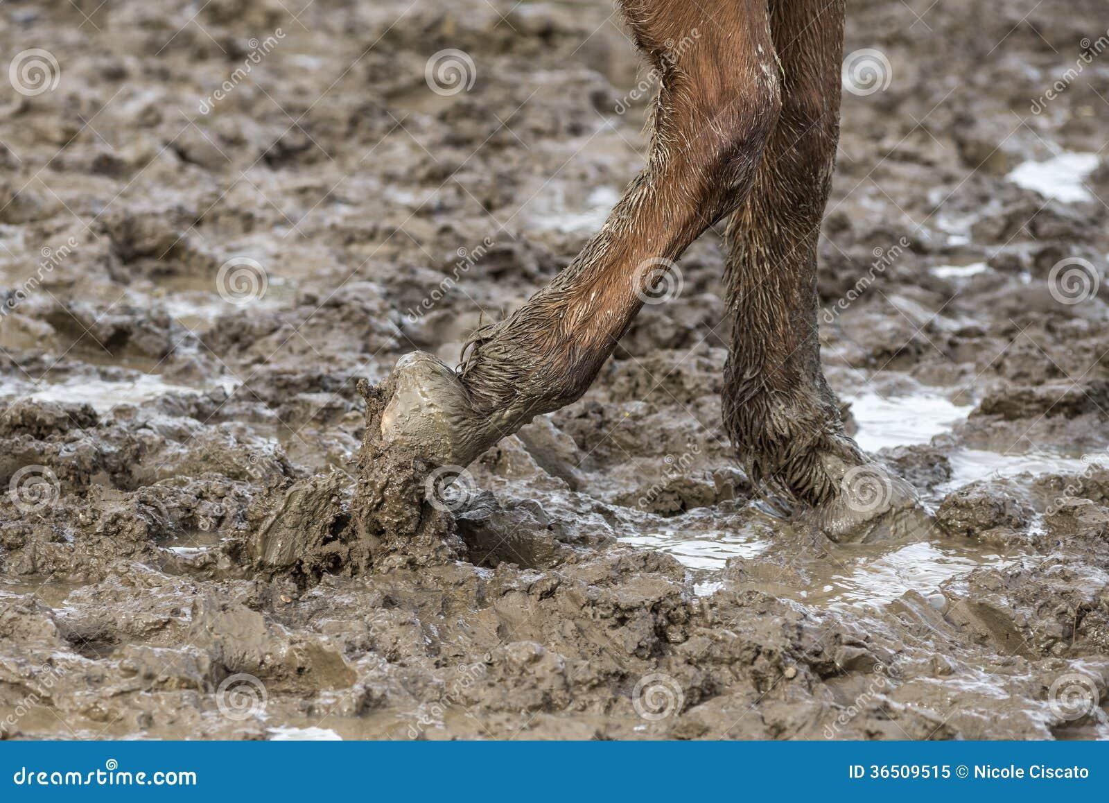 Cheval aux pieds nus dans la boue