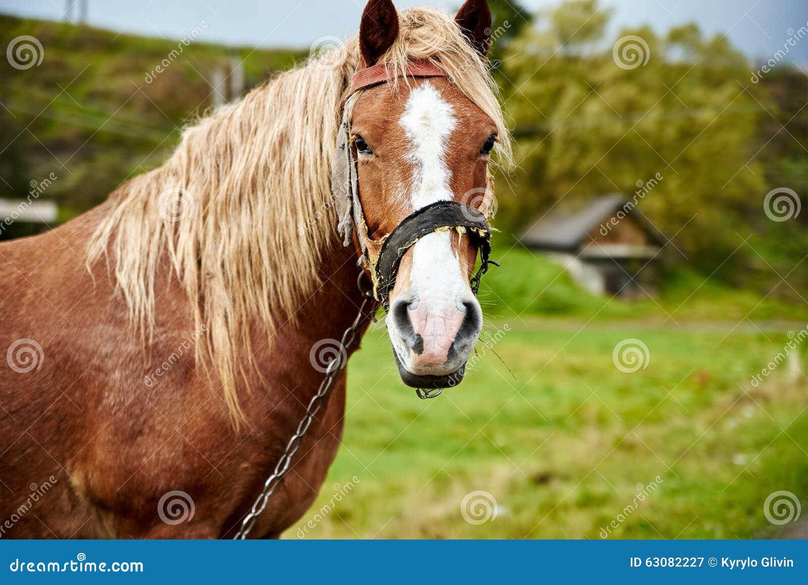 Download Cheval Avec La Belle Crinière Image stock - Image du animal, émotion: 63082227