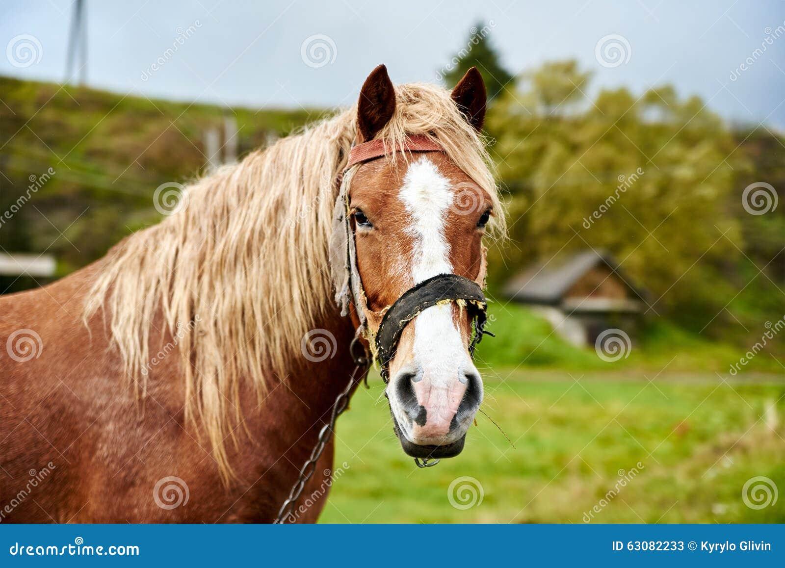 Download Cheval Avec La Belle Crinière Image stock - Image du ranch, espiègle: 63082233