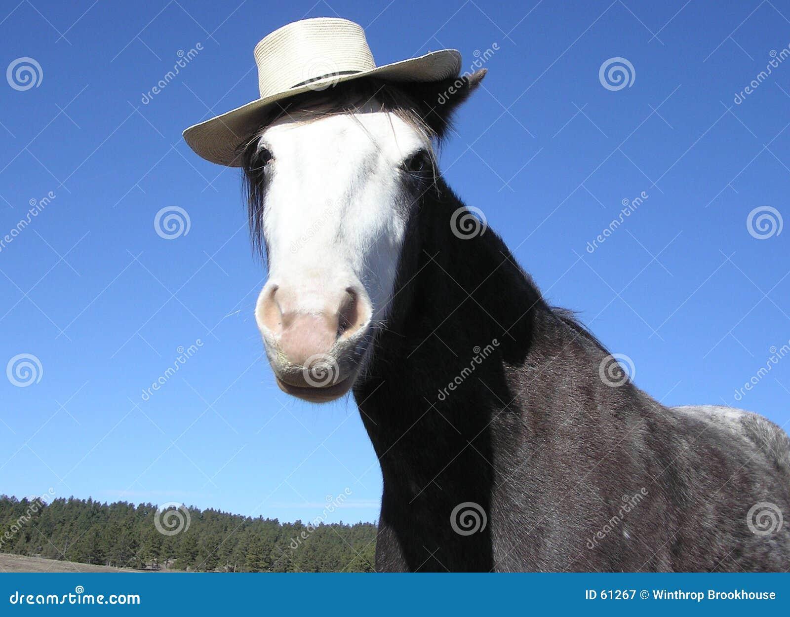 Cheval avec le chapeau