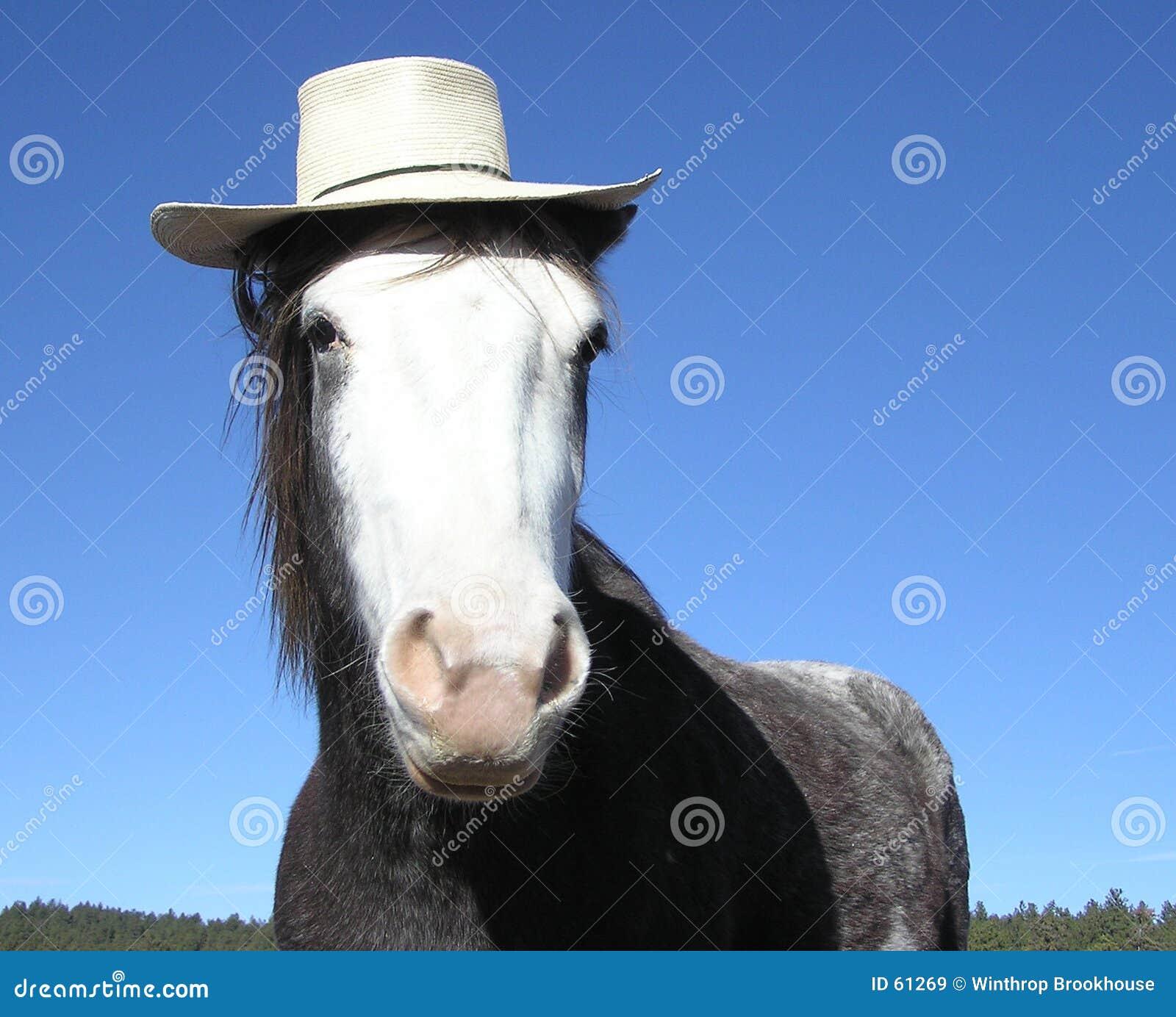 Cheval avec le chapeau de paille