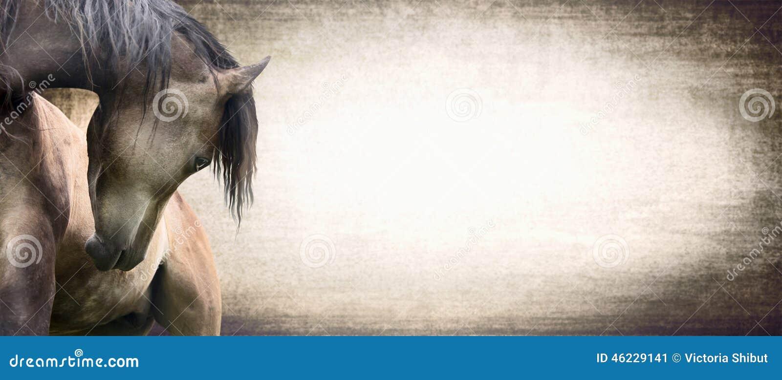 Cheval avec le cou admirablement incurv sur le fond de for Sfondi cavalli gratis