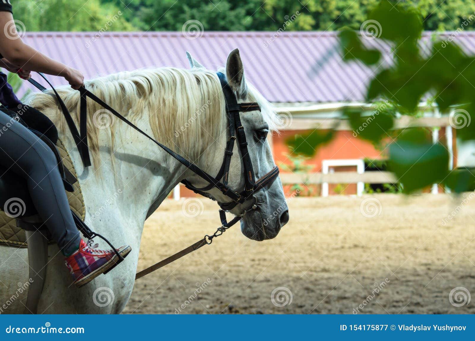Cheval blanc et chariot à la ferme