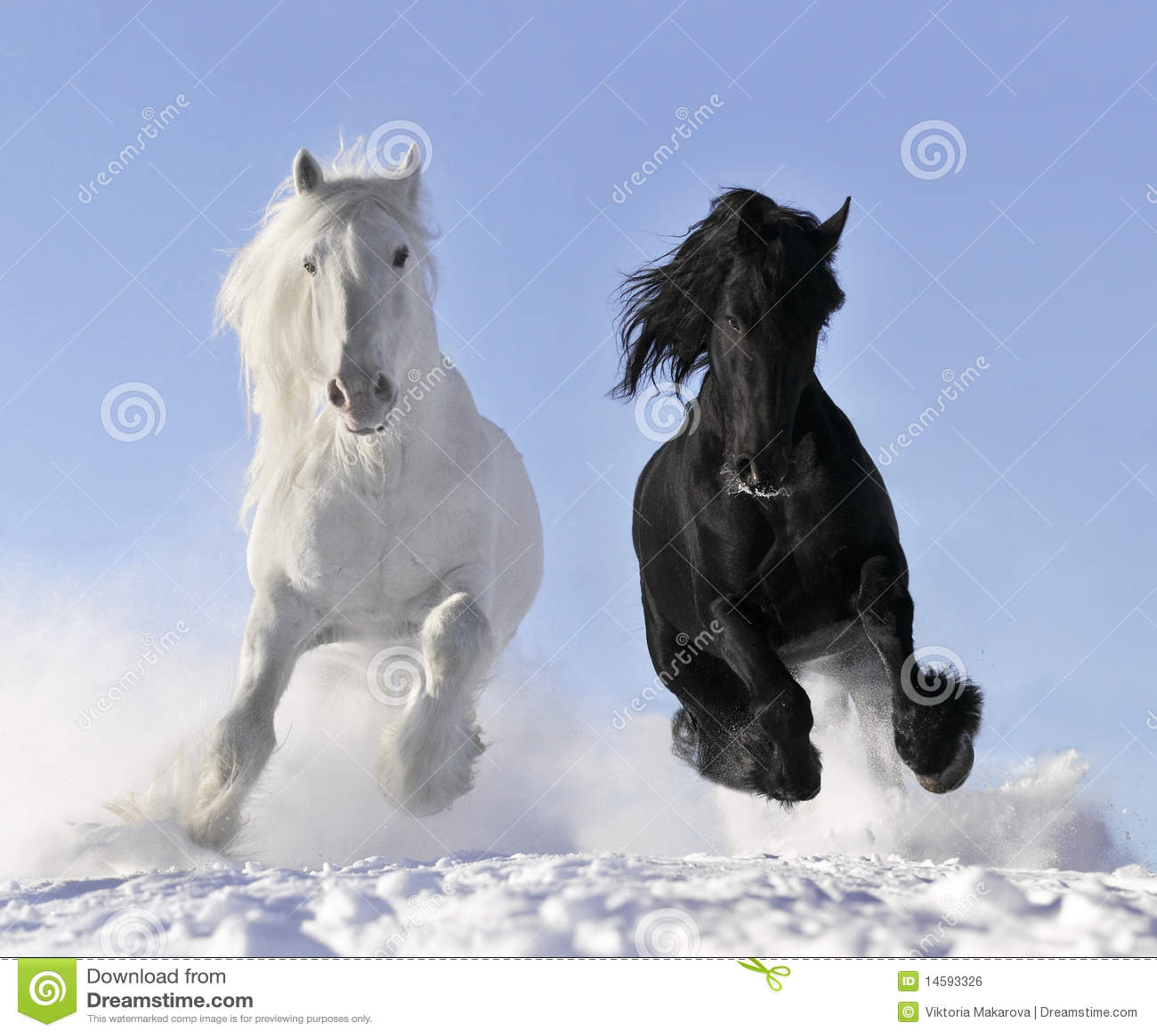 Cheval blanc et noir