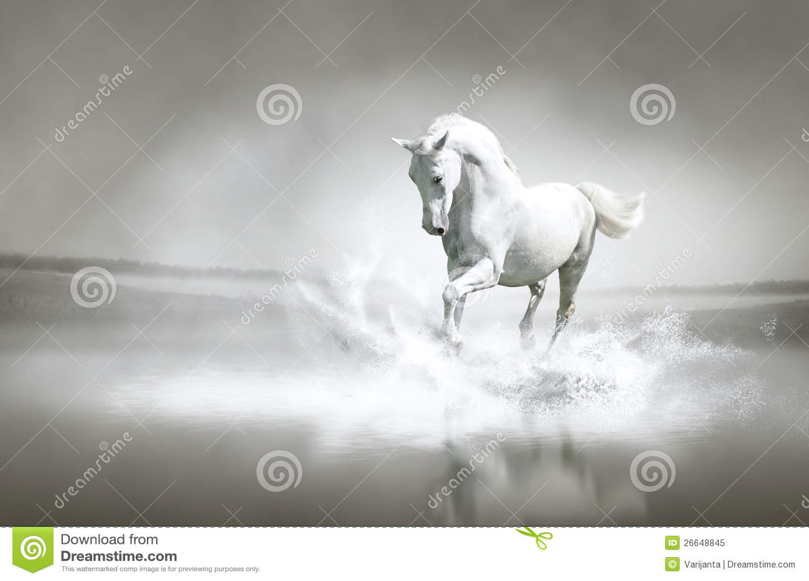 Cheval blanc fonctionnant par l eau