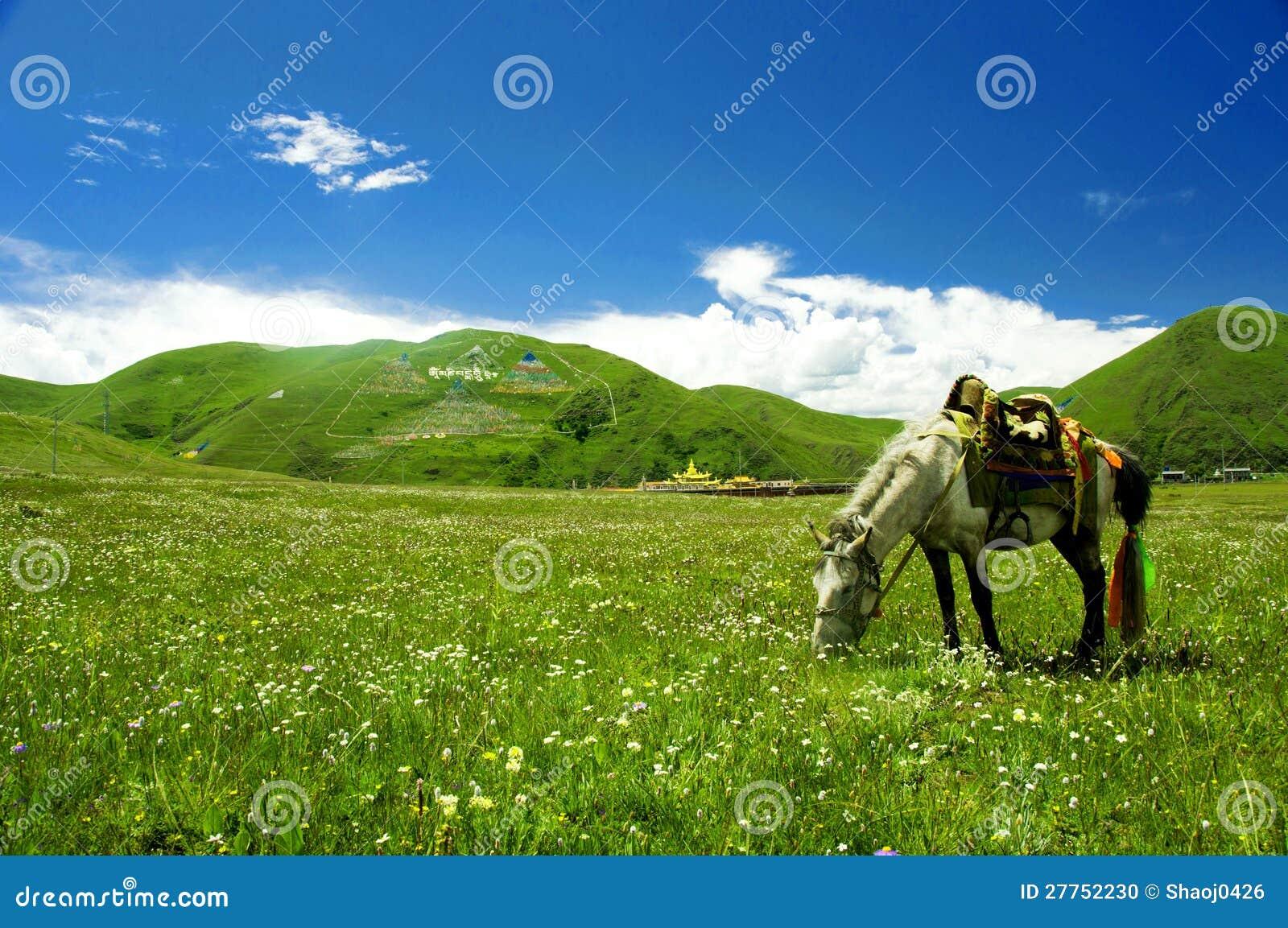 Cheval dans la prairie de Tagong