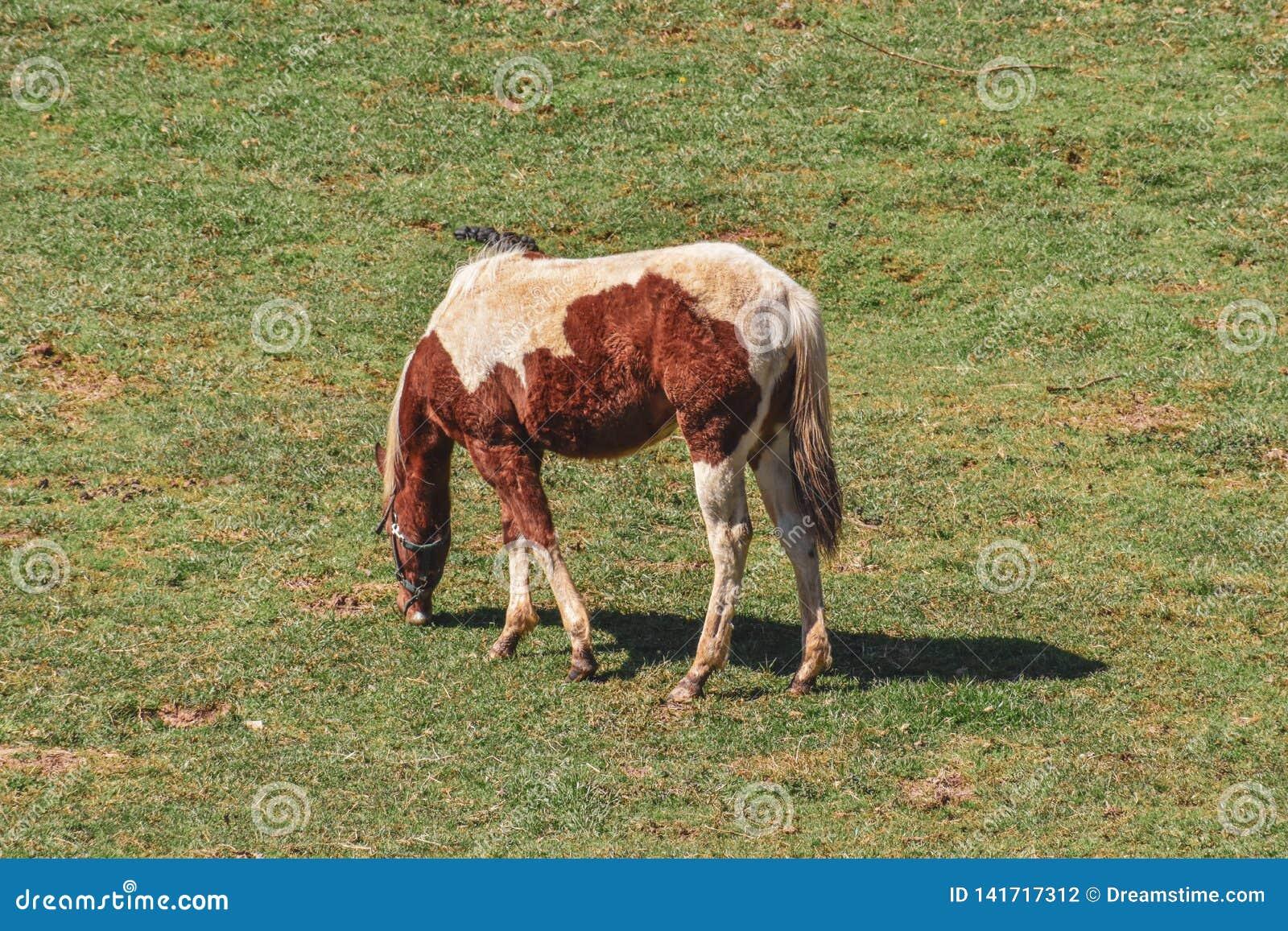 Cheval dans un pâturage de champ