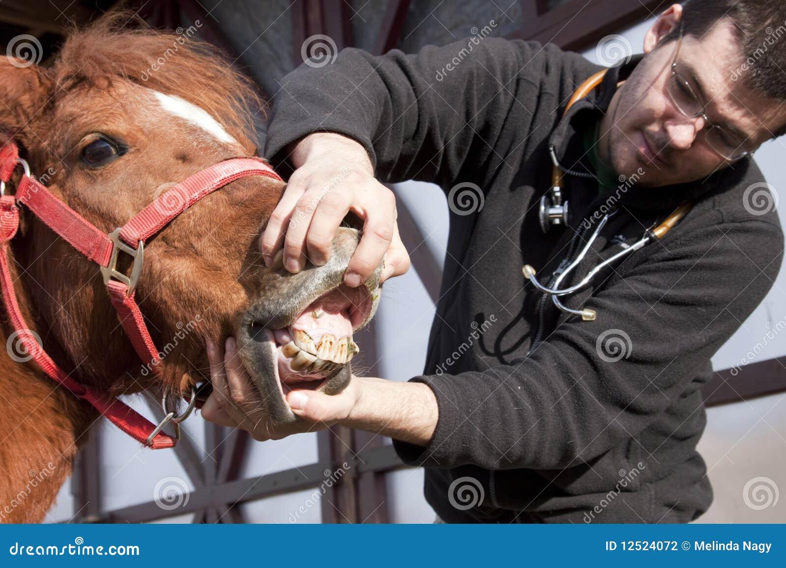 Cheval de examen de vétérinaire