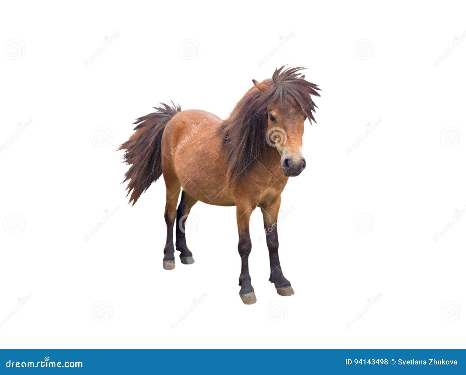 Cheval de poney de Brown