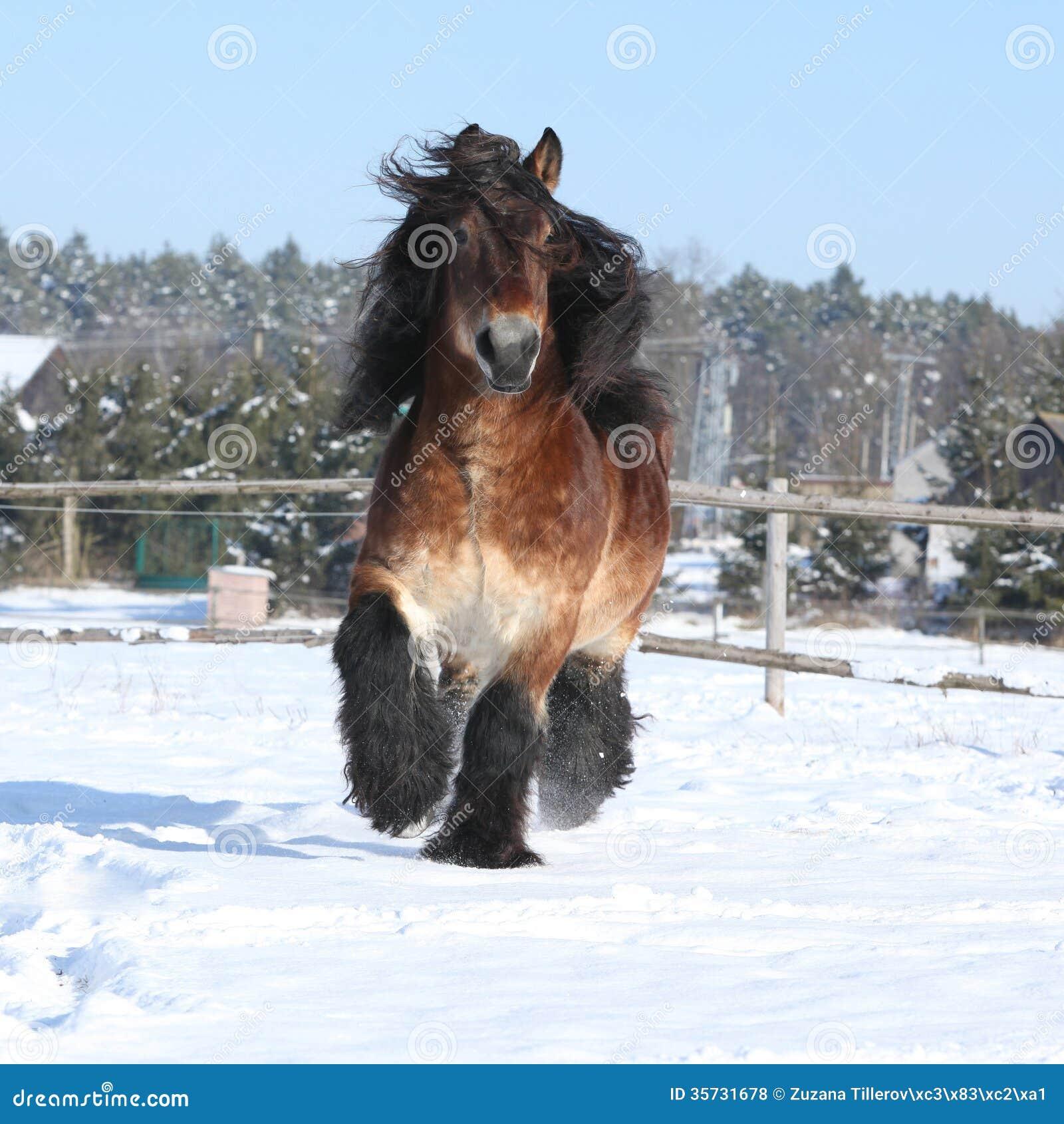 cheval de trait vitesse