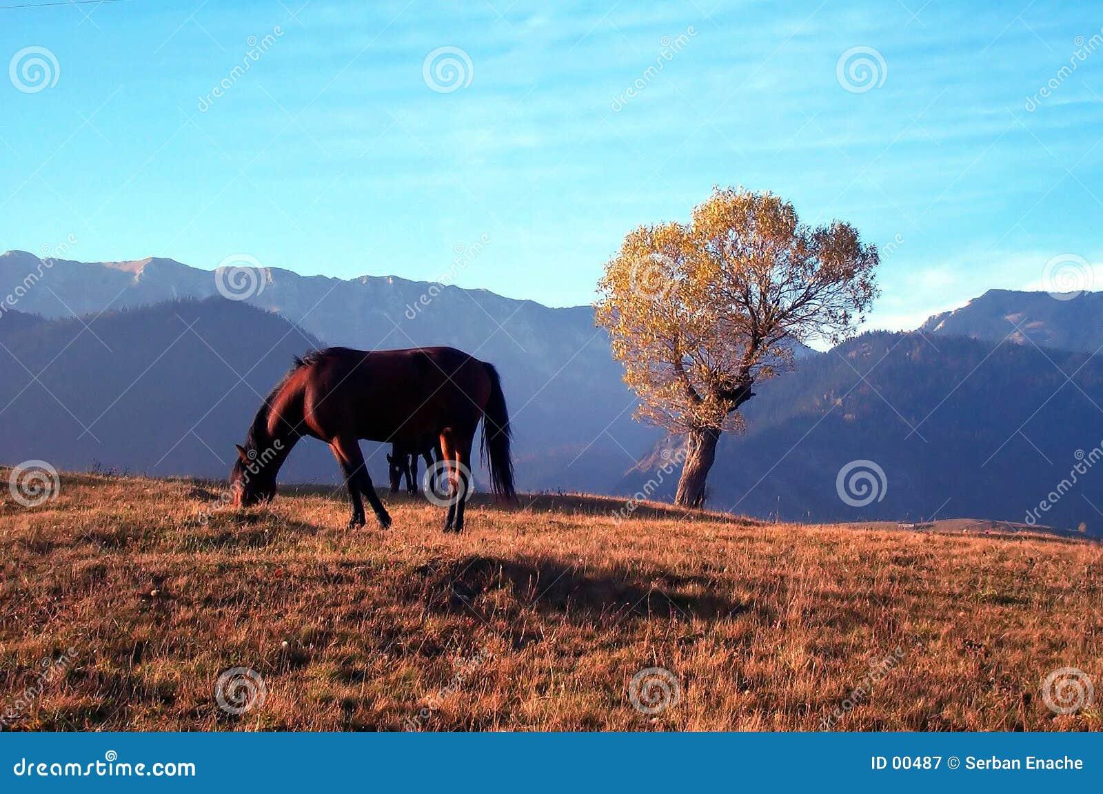 Cheval et arbre