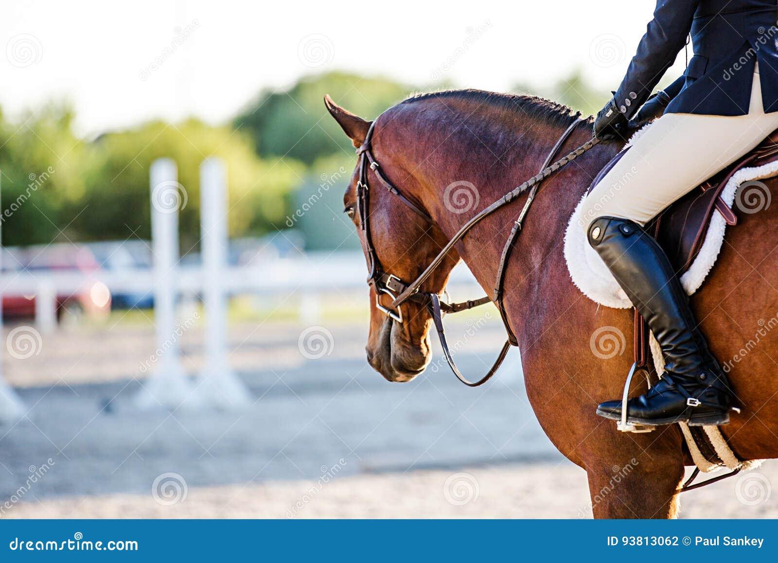 Cheval et cavalier à un événement équestre