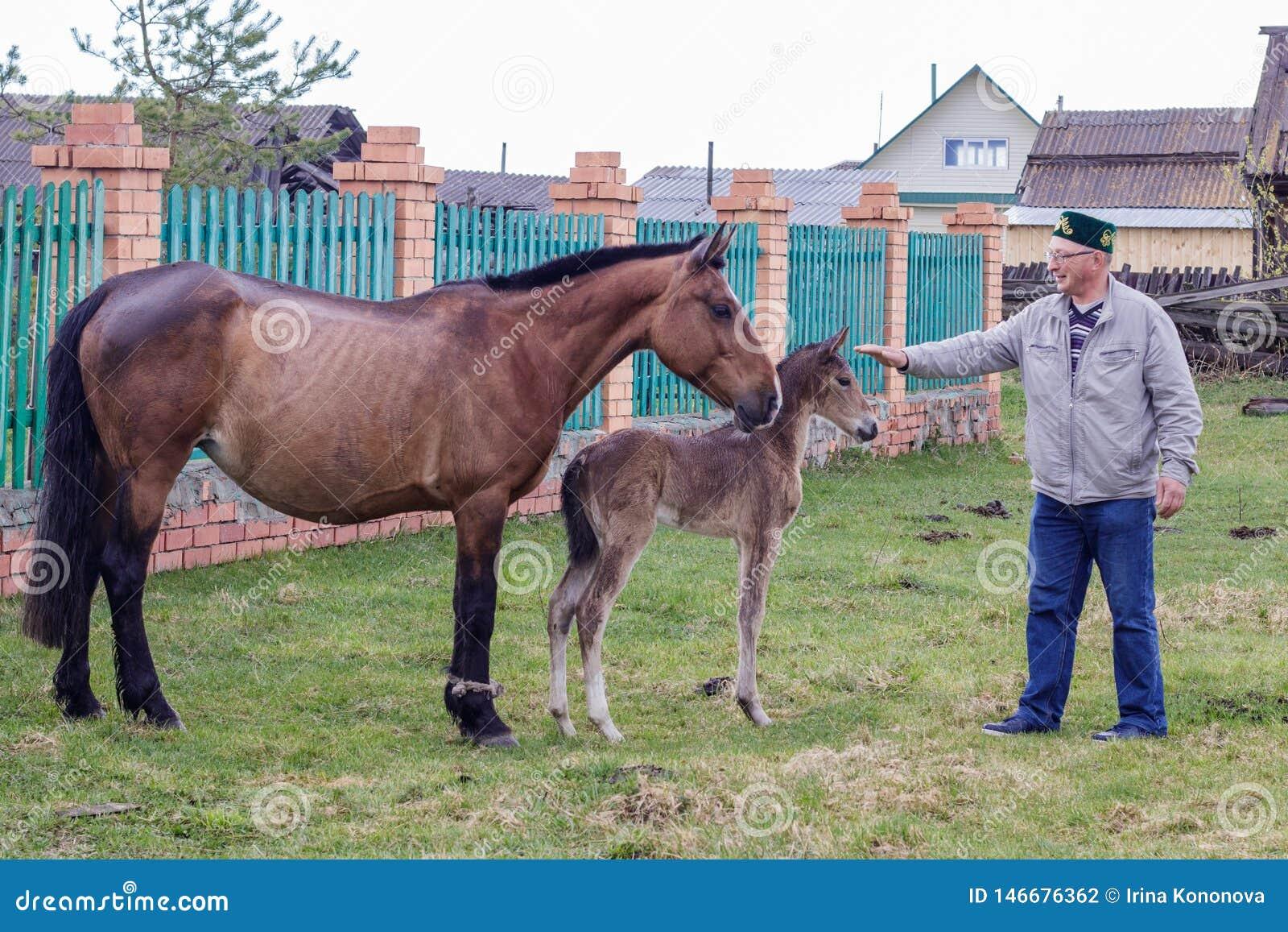 Cheval et poulain enceintes d Aromashevsky Russie le 23 mai 2018 avec l homme inconnu