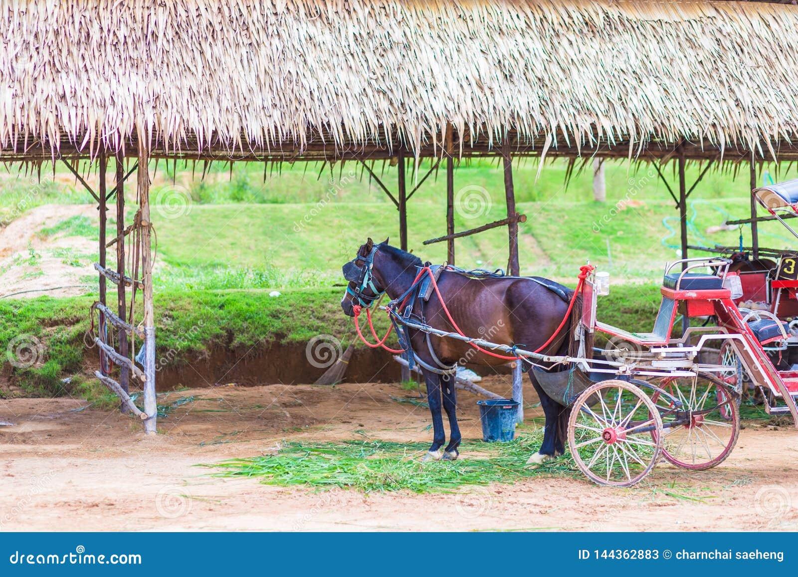 Cheval et un beau vieux chariot dans la vieille ferme