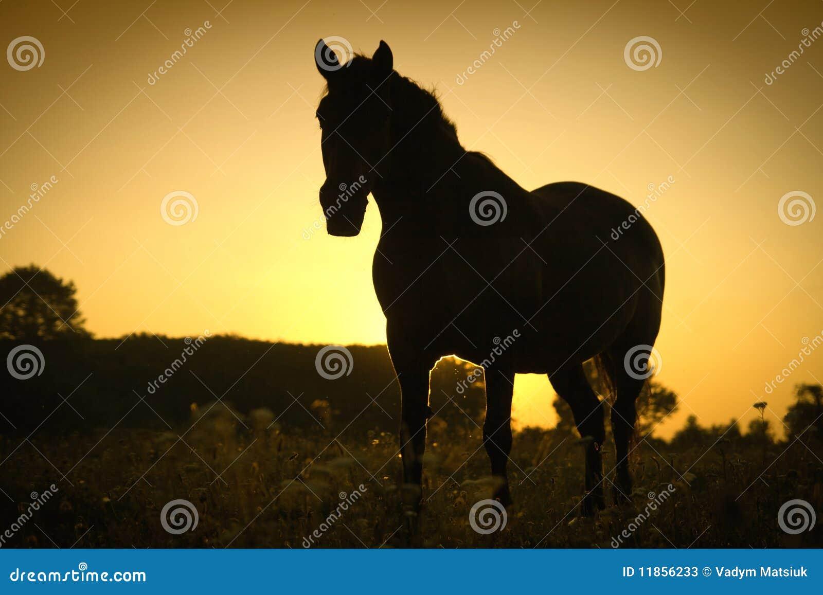 Cheval et un coucher du soleil