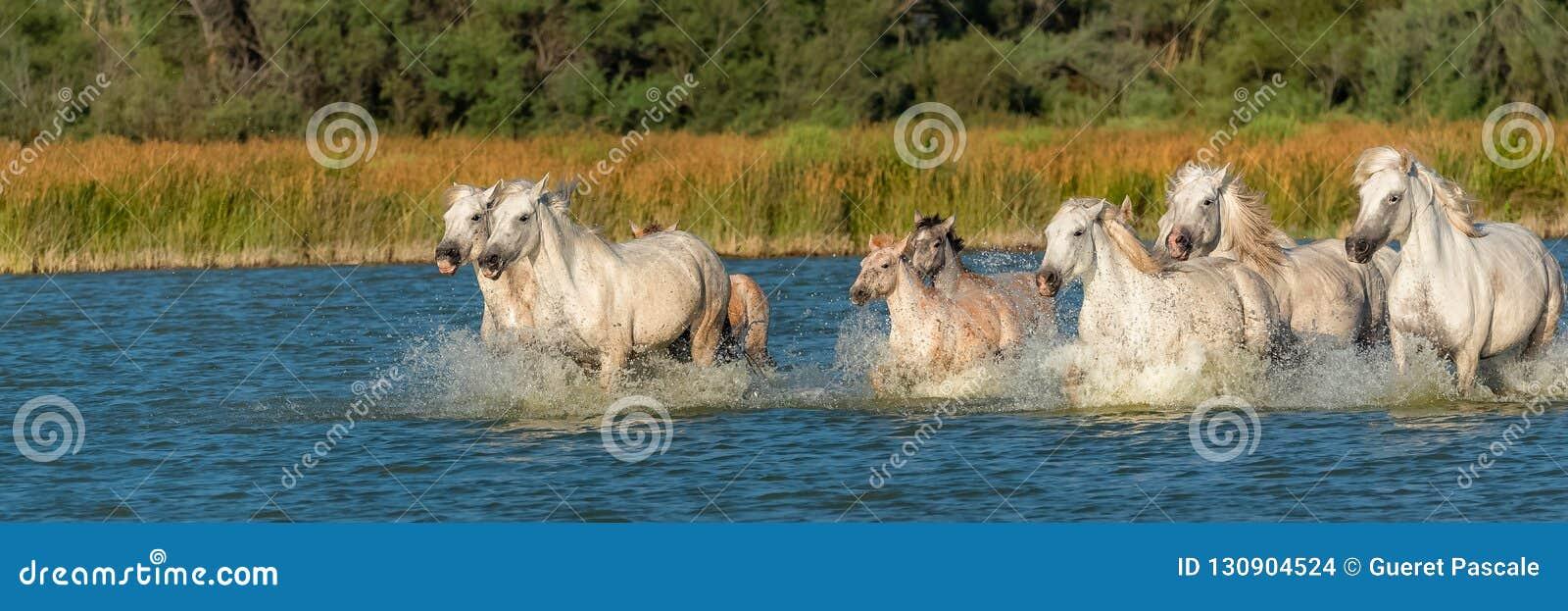 Cheval fonctionnant dans l eau