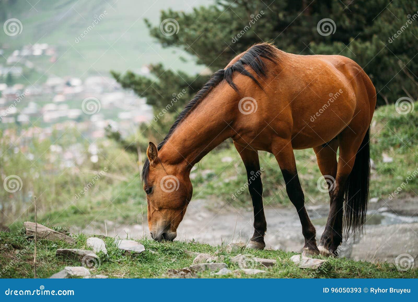 Cheval frôlant sur la pente de montagne verte au printemps en montagnes
