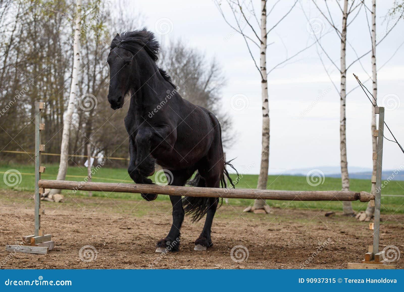 Cheval frison sautant Sport équin