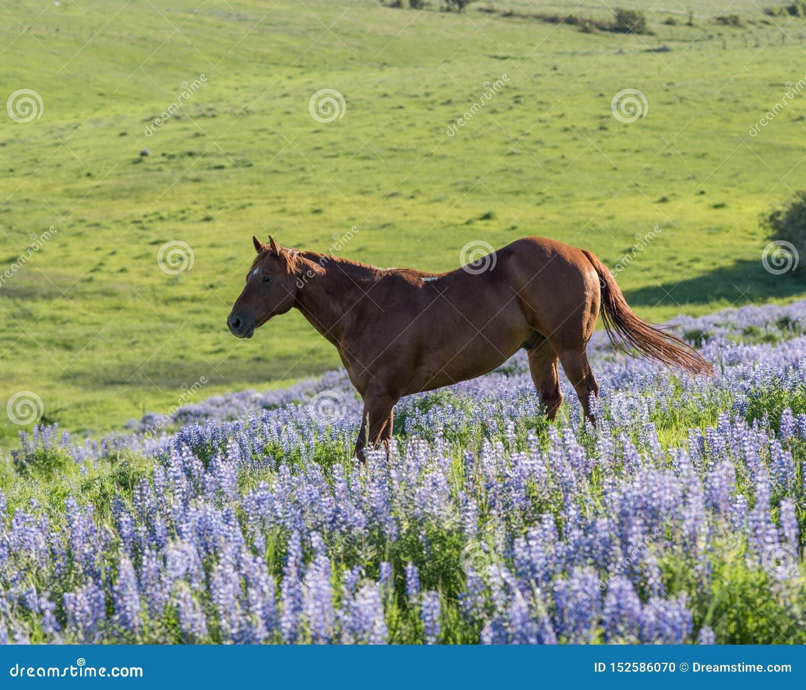 Cheval heureux dans classé de la floraison de loup