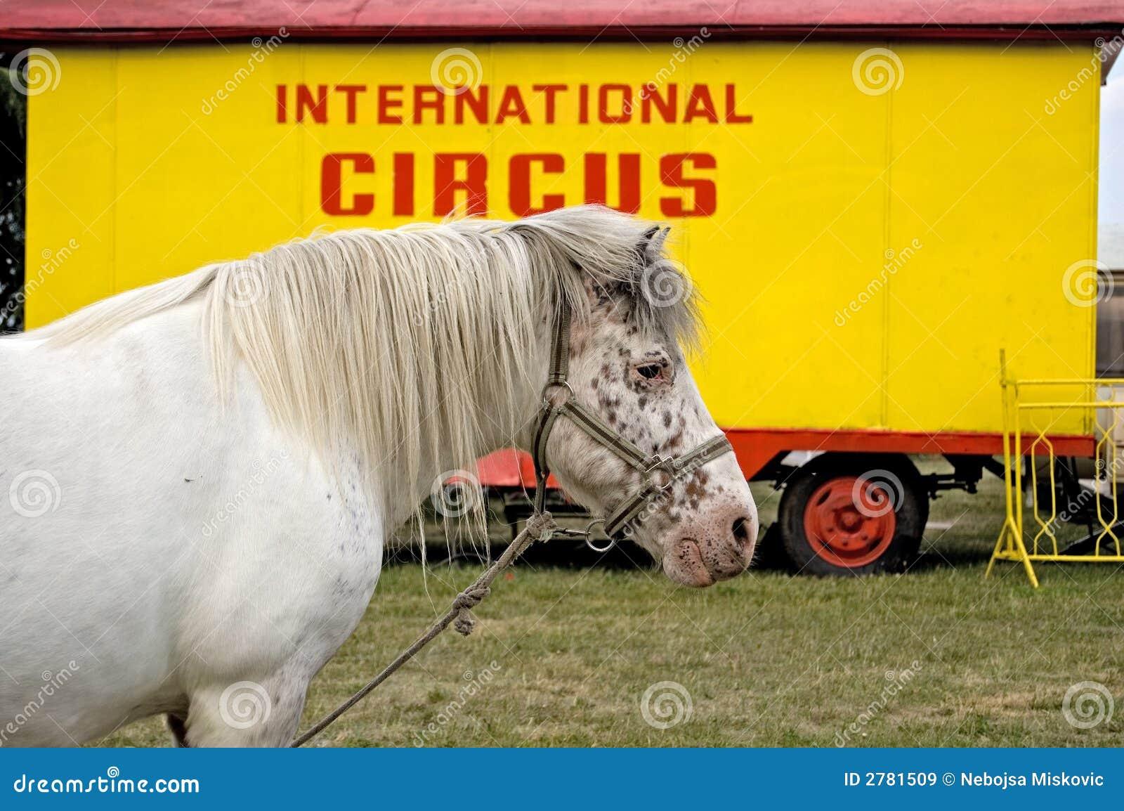 Cheval international de cirque