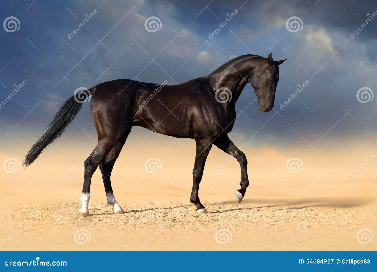 Cheval noir dans le désert