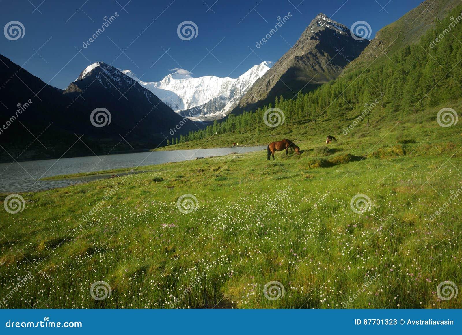Cheval parmi l herbe verte en nature Cheval debout d isolement Pâturage des chevaux dans le village