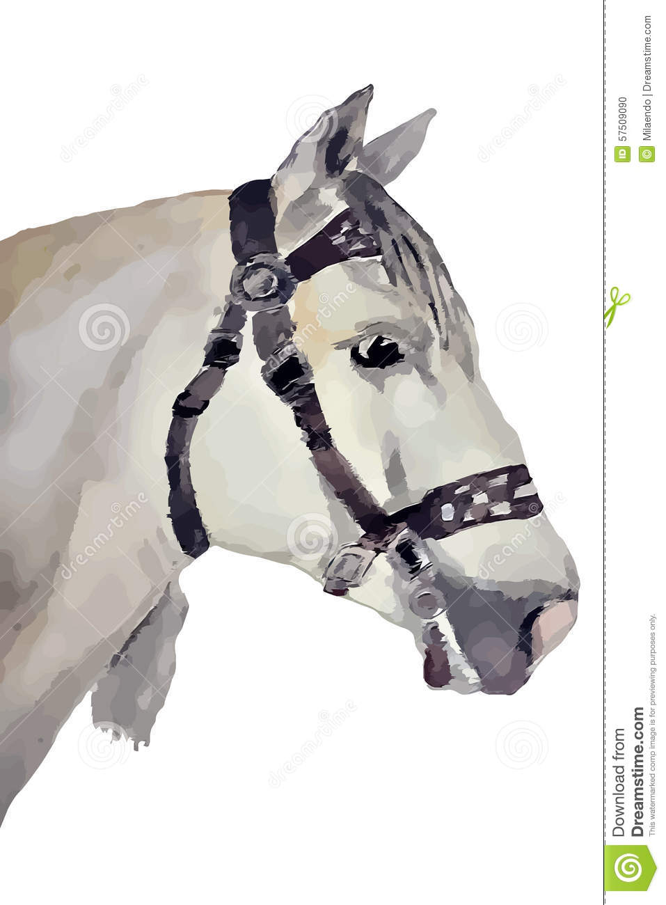 Cheval, race andalouse (chef)