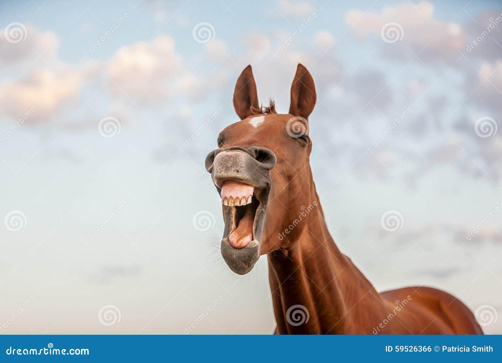 Cheval riant