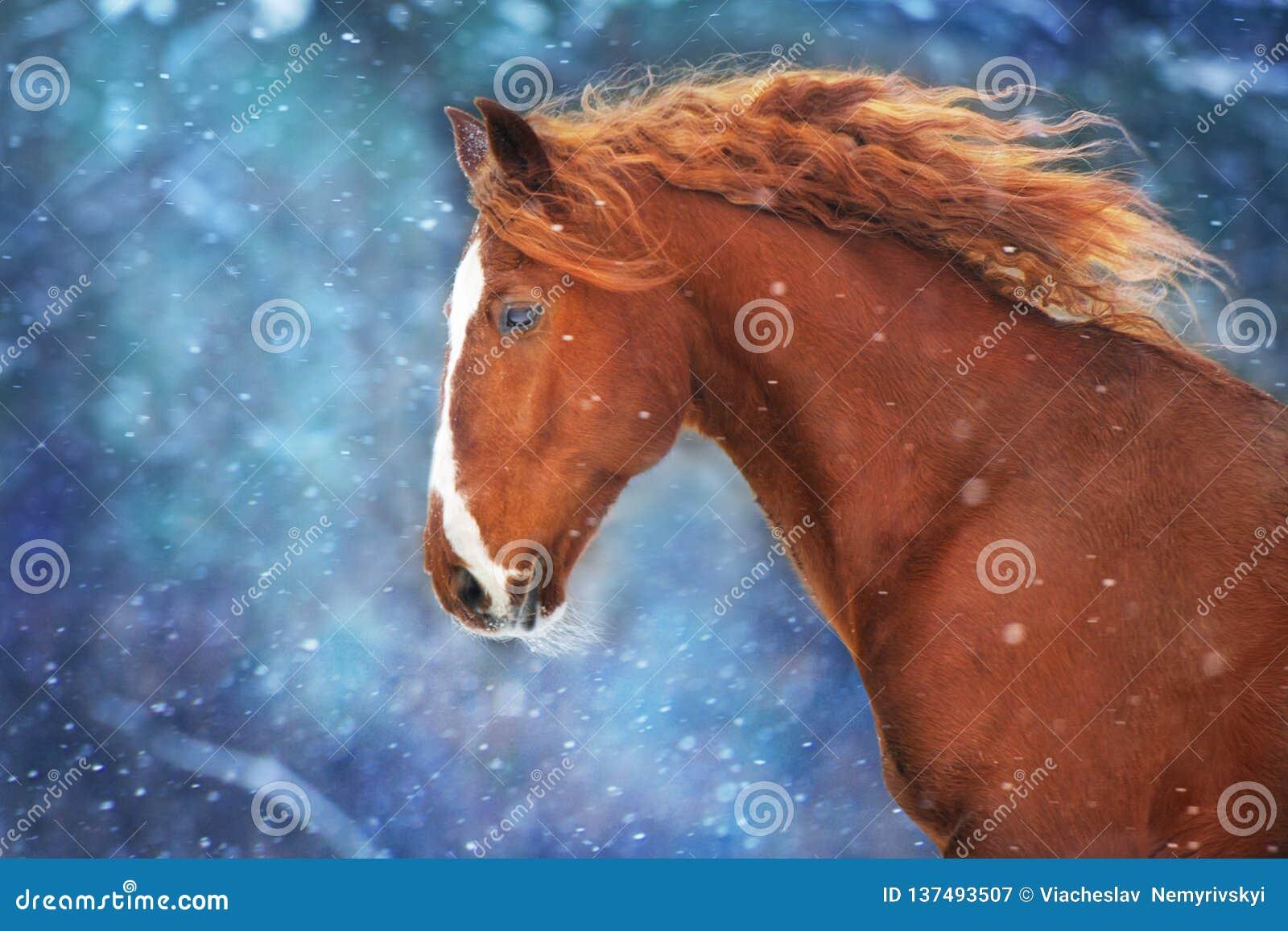 Cheval rouge dans la neige