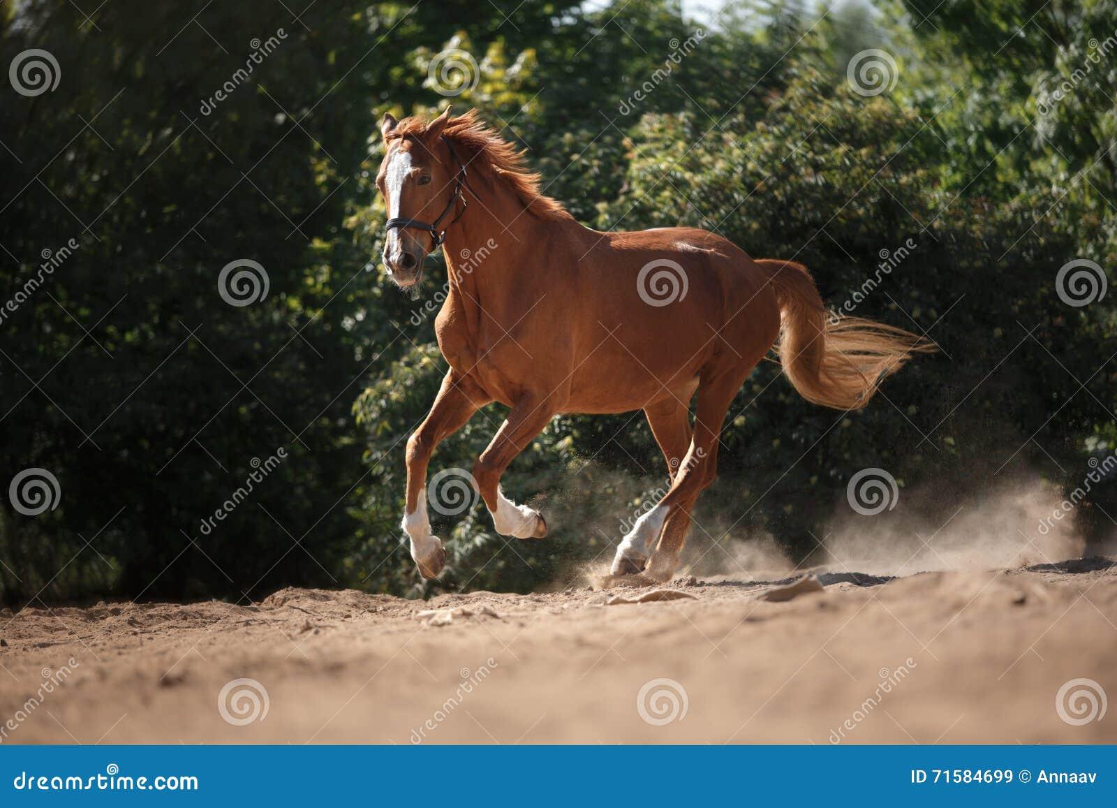 Cheval sur la nature Portrait d un cheval, cheval brun