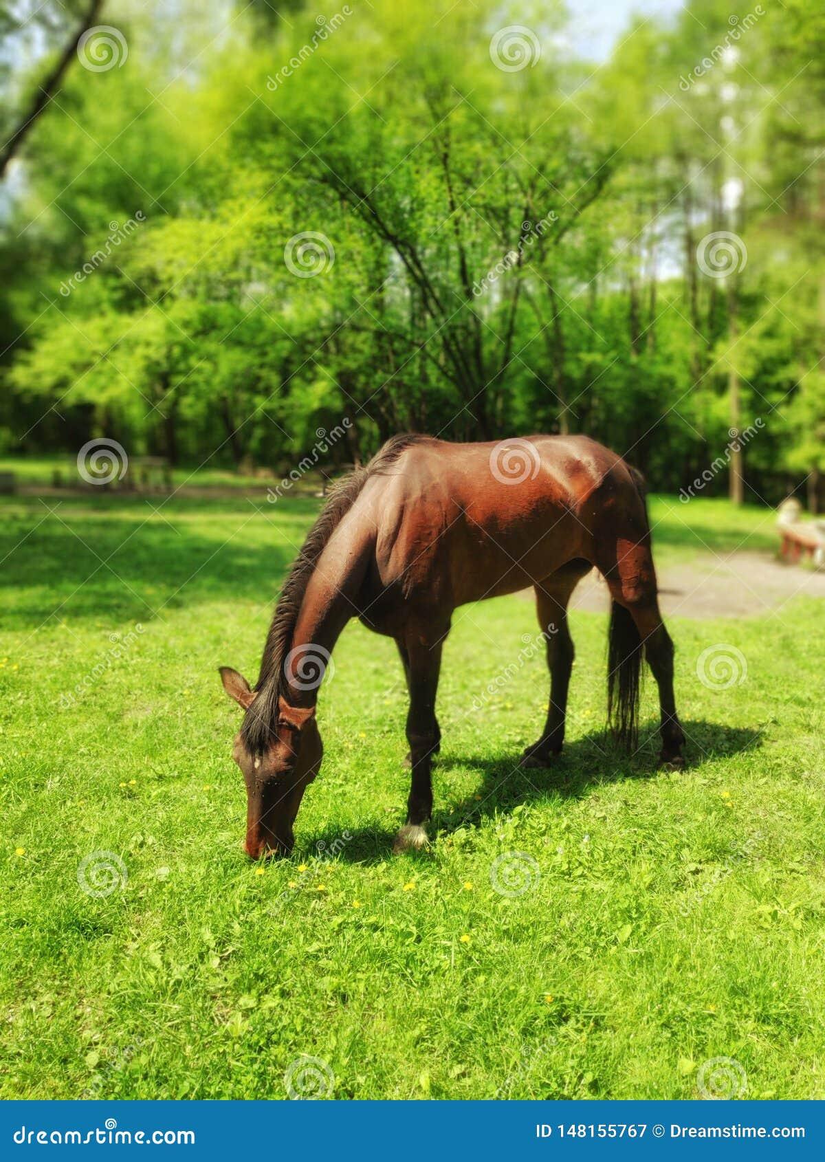 Cheval sur la pelouse