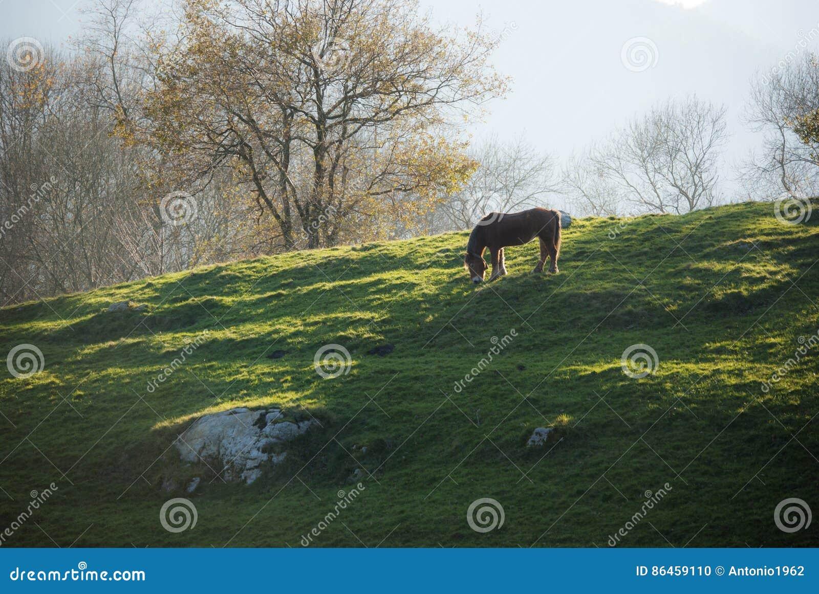Cheval sur le pré de montagne
