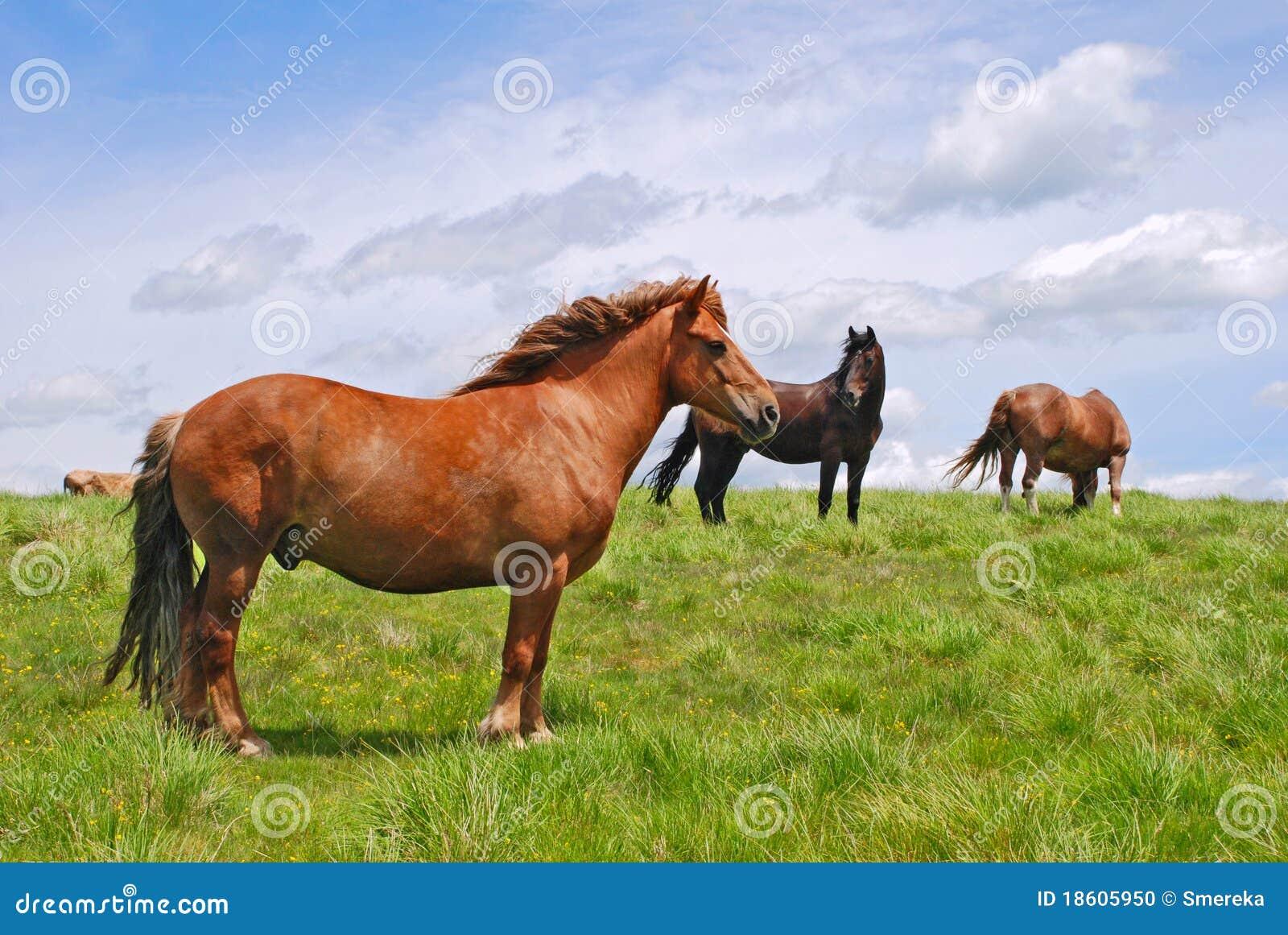 cheval sur un flanc de coteau photo stock image 18605950. Black Bedroom Furniture Sets. Home Design Ideas