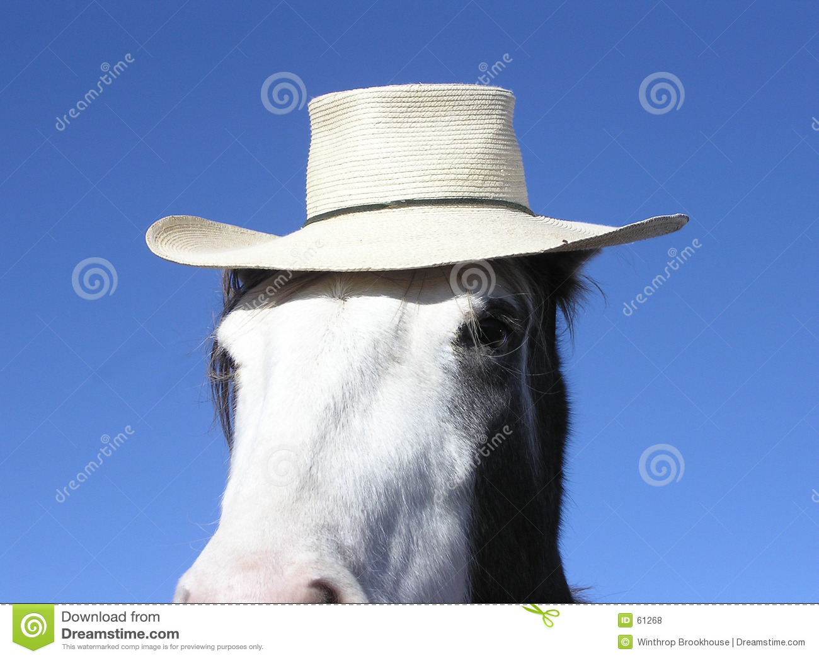 Cheval utilisant un chapeau