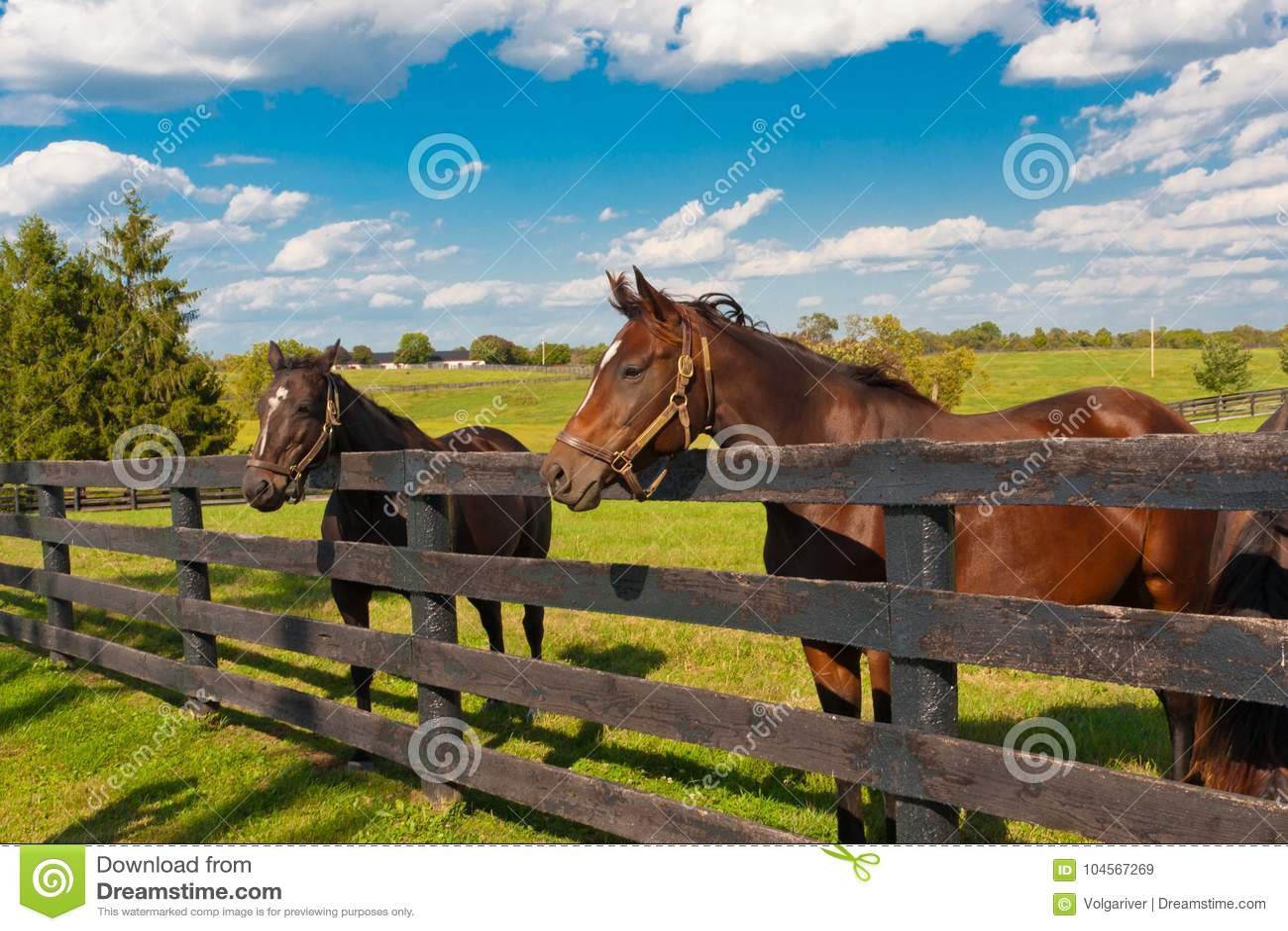 Chevaux à la ferme de cheval