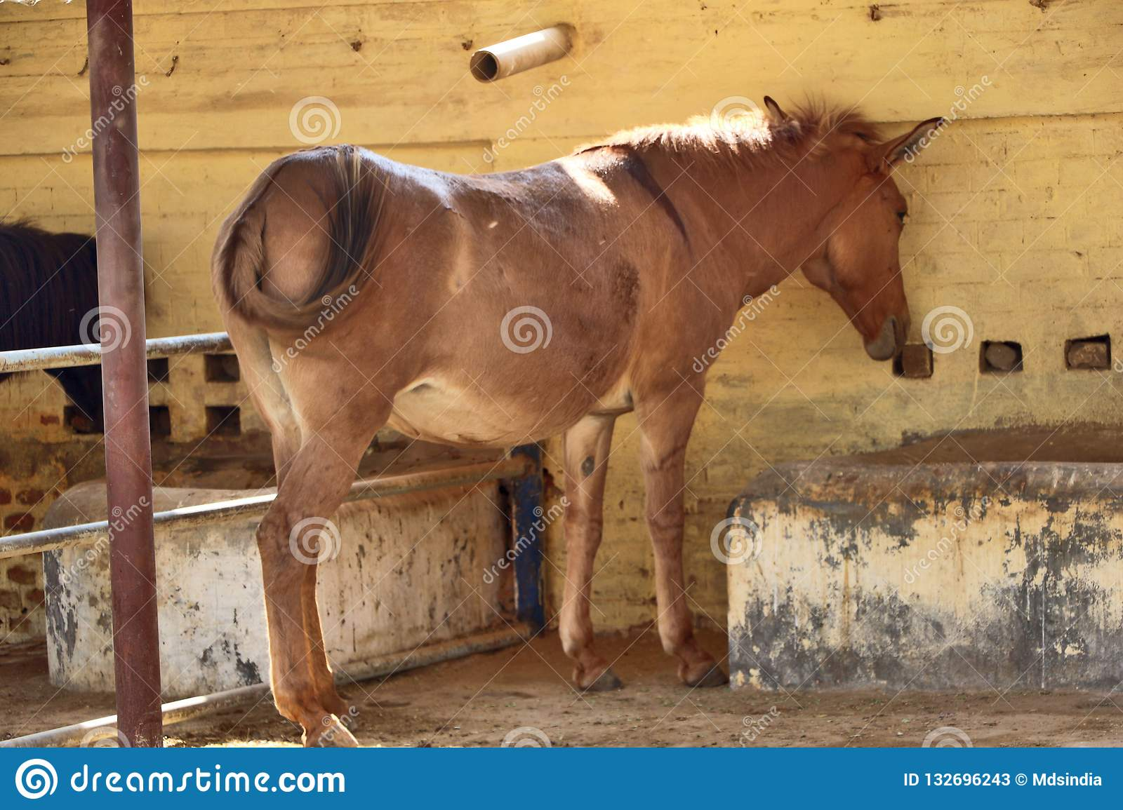 Mules Homme Galop