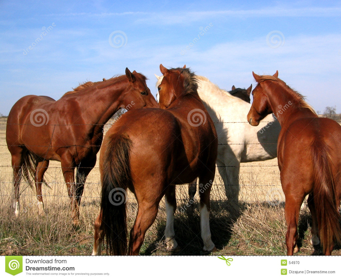Download Chevaux photo stock. Image du ranch, troupeau, relaxation - 54970