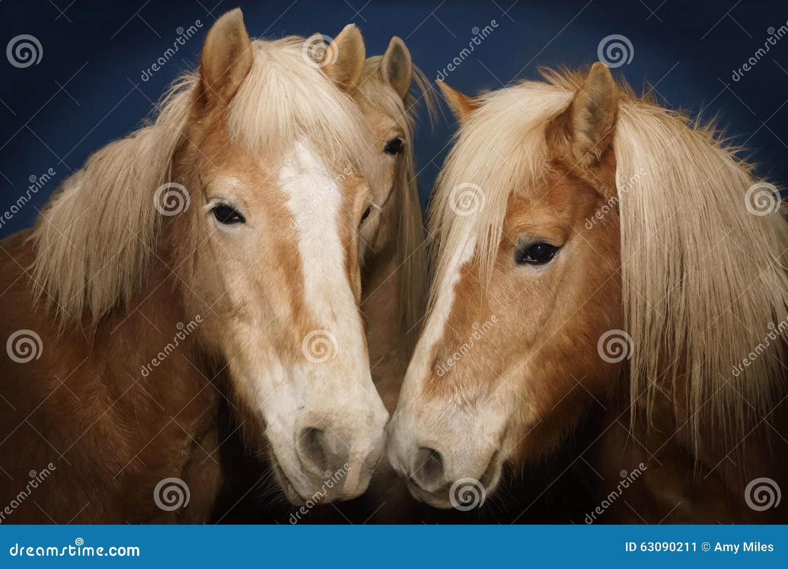 Download 3 chevaux image stock. Image du beau, bronzage, bleu - 63090211