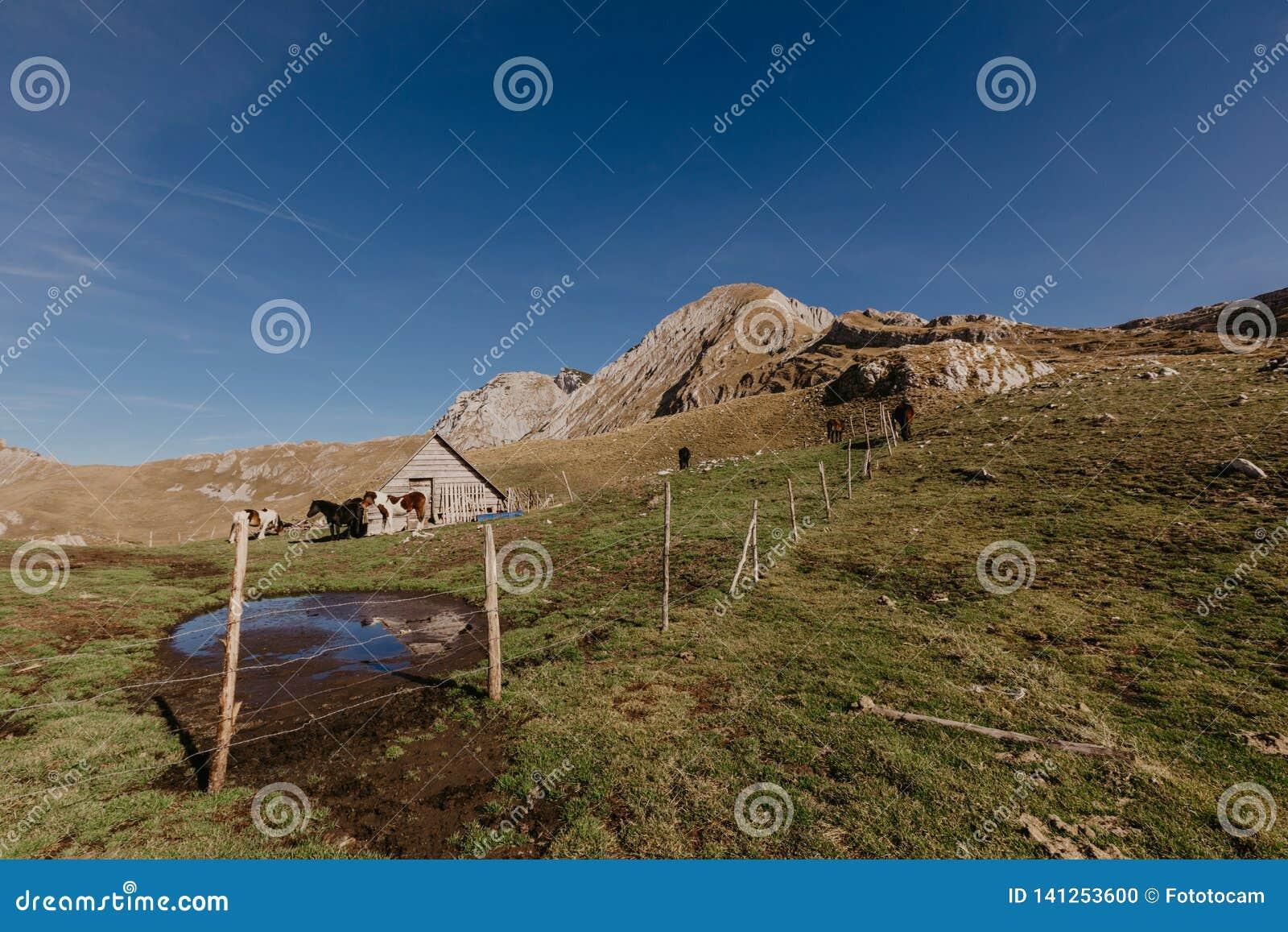 Chevaux dans les montagnes de Monténégro