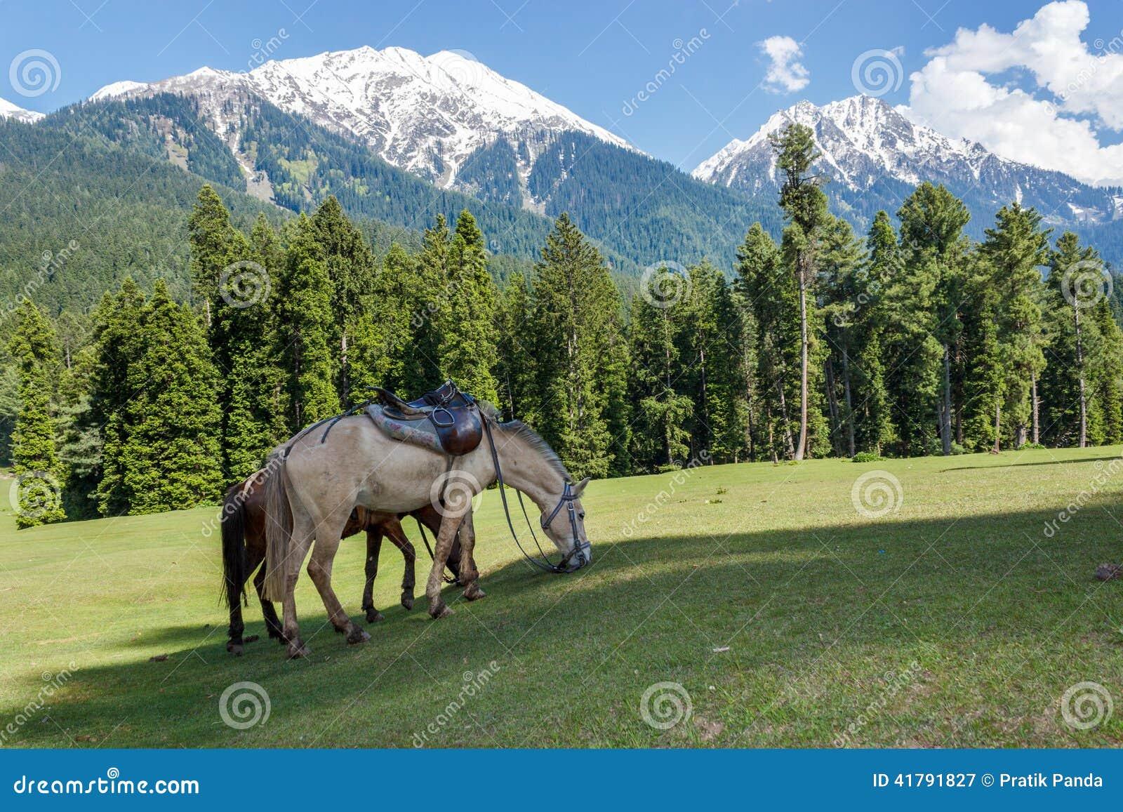 chevaux fr lant paysage de campagne de montagne photo. Black Bedroom Furniture Sets. Home Design Ideas