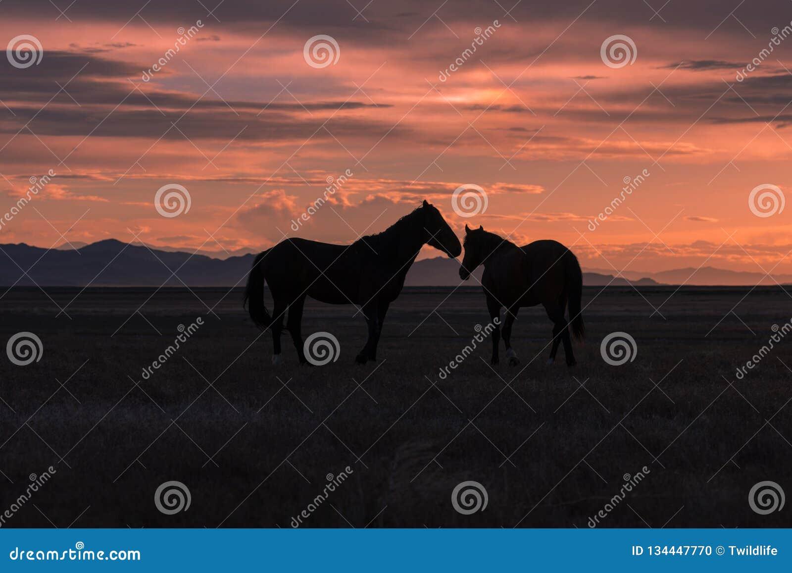 Chevaux sauvages silhouettés au coucher du soleil