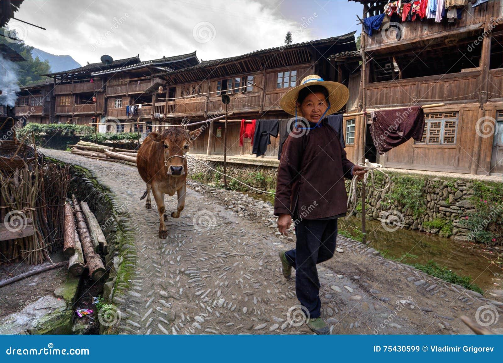 Chińscy kobiet prowadzenia wzdłuż wioski ulicznej brown krowy, trzyma arkanę
