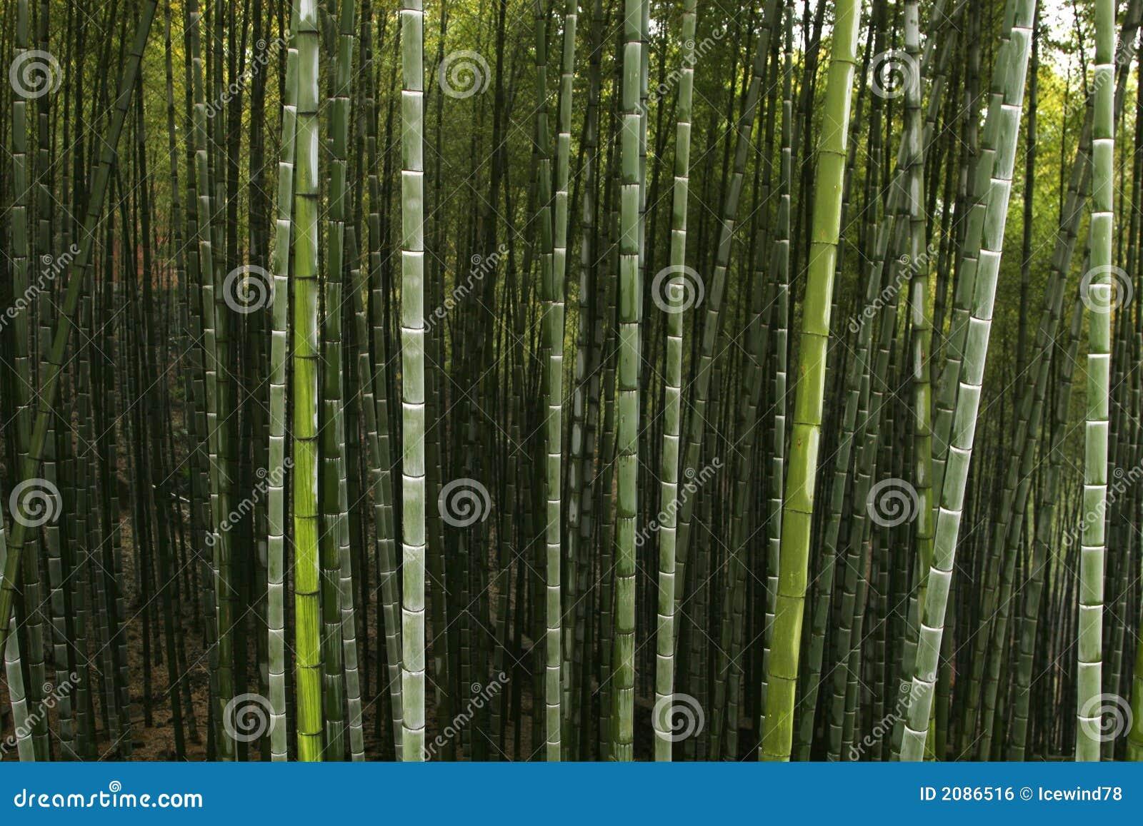 Chińska leśna góry