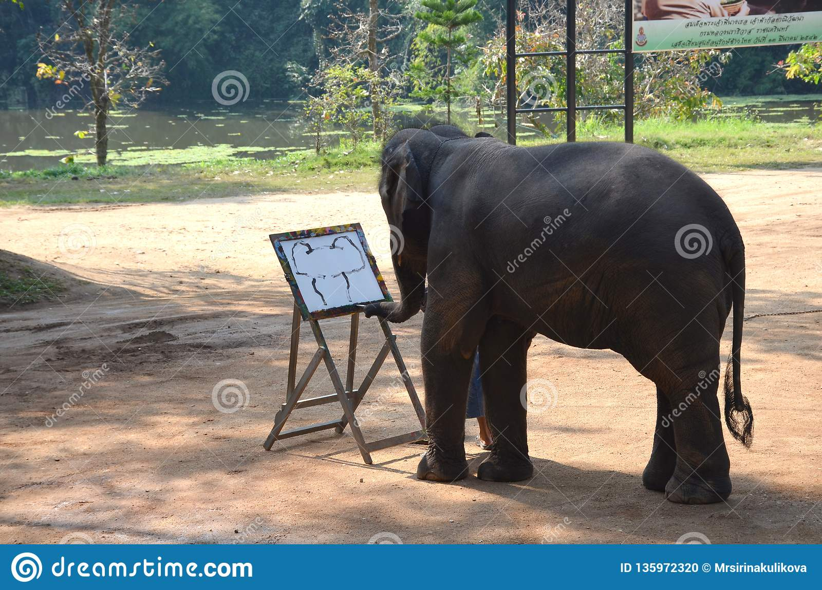 Chiang Mai, Thailand - December 16, 2015: Daily show at the Thai Elephant Conservation Center in Lampang. The elephant draws