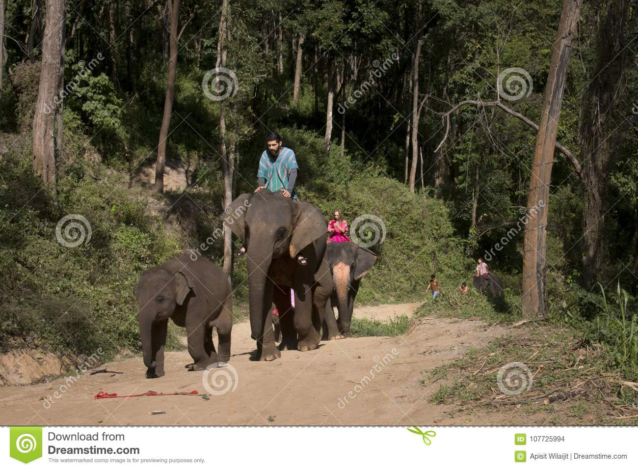 CHIANG MAI, THAILAND - Jan. 9: The Elephants and traveler trekking in the forest at The Samueng Elephant Camp in the Kaew Ta Chan