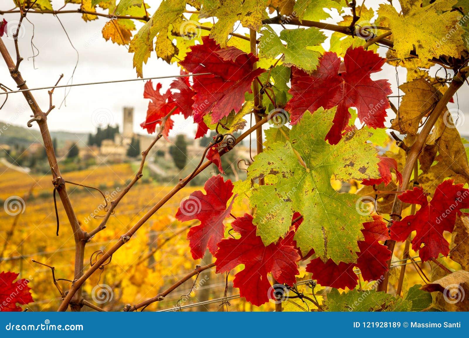 Chianti葡萄园的秋天颜色有Badia的Passignano在背景中,在锡耶纳和佛罗伦萨之间 意大利