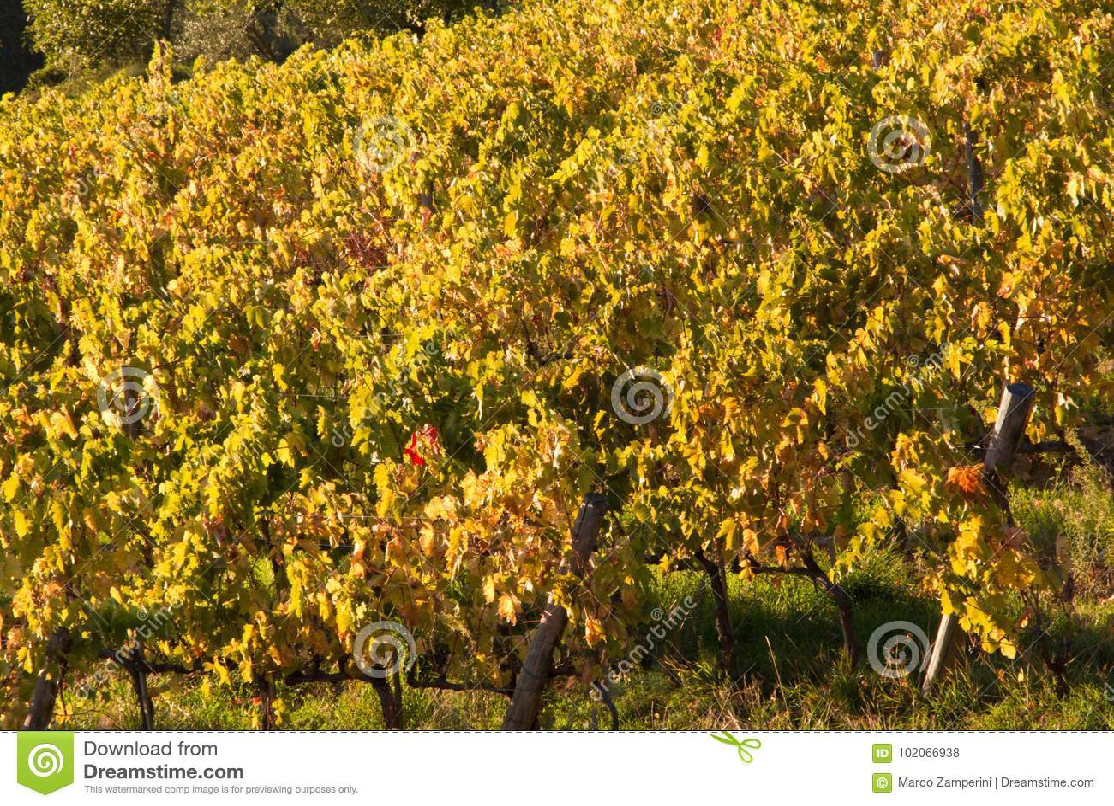 Chianti de vignoble